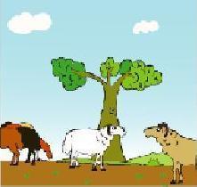 The 2 sheeps.JPG